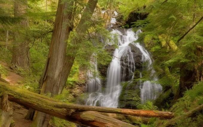 Fallen Logs On A Forest Waterfall HD Desktop Background