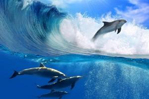 wave images