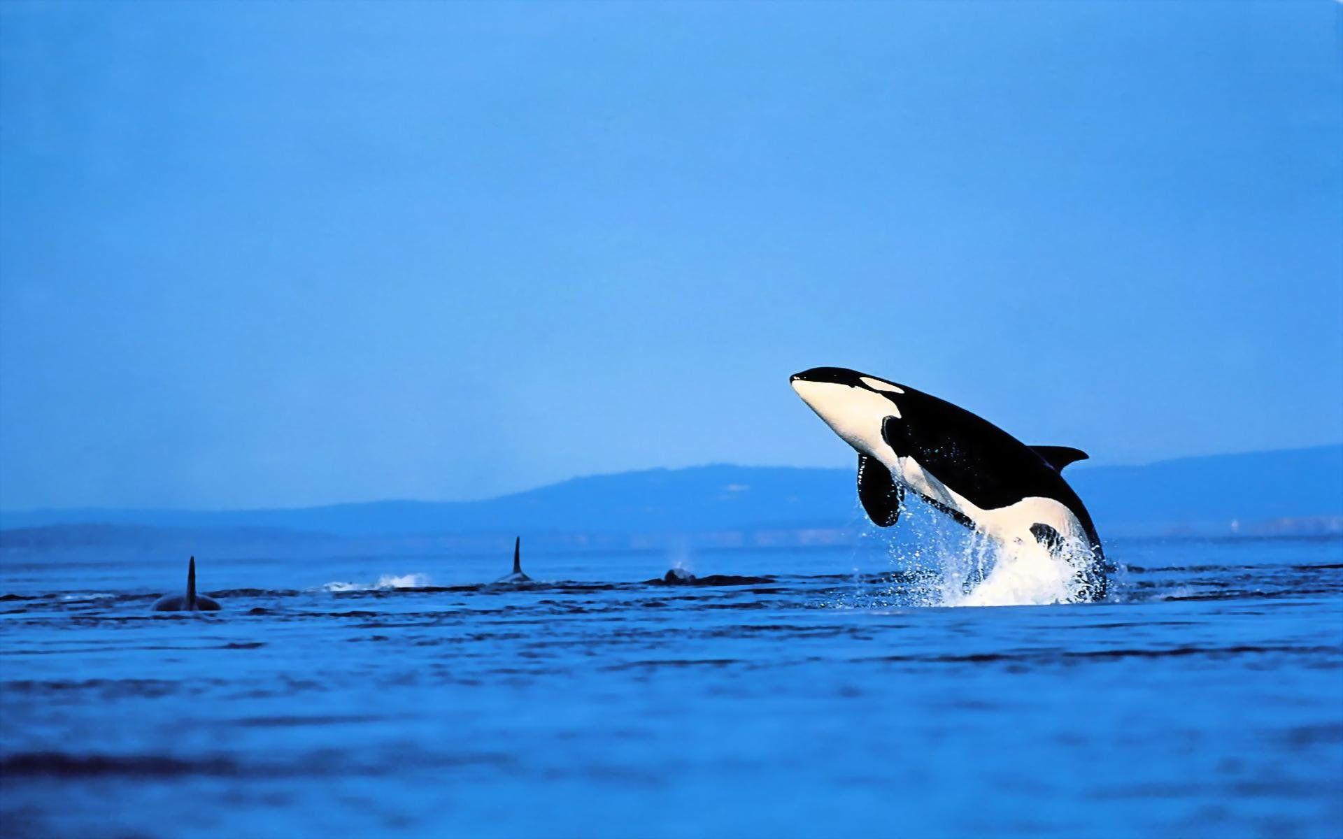 whale sea wallpaper