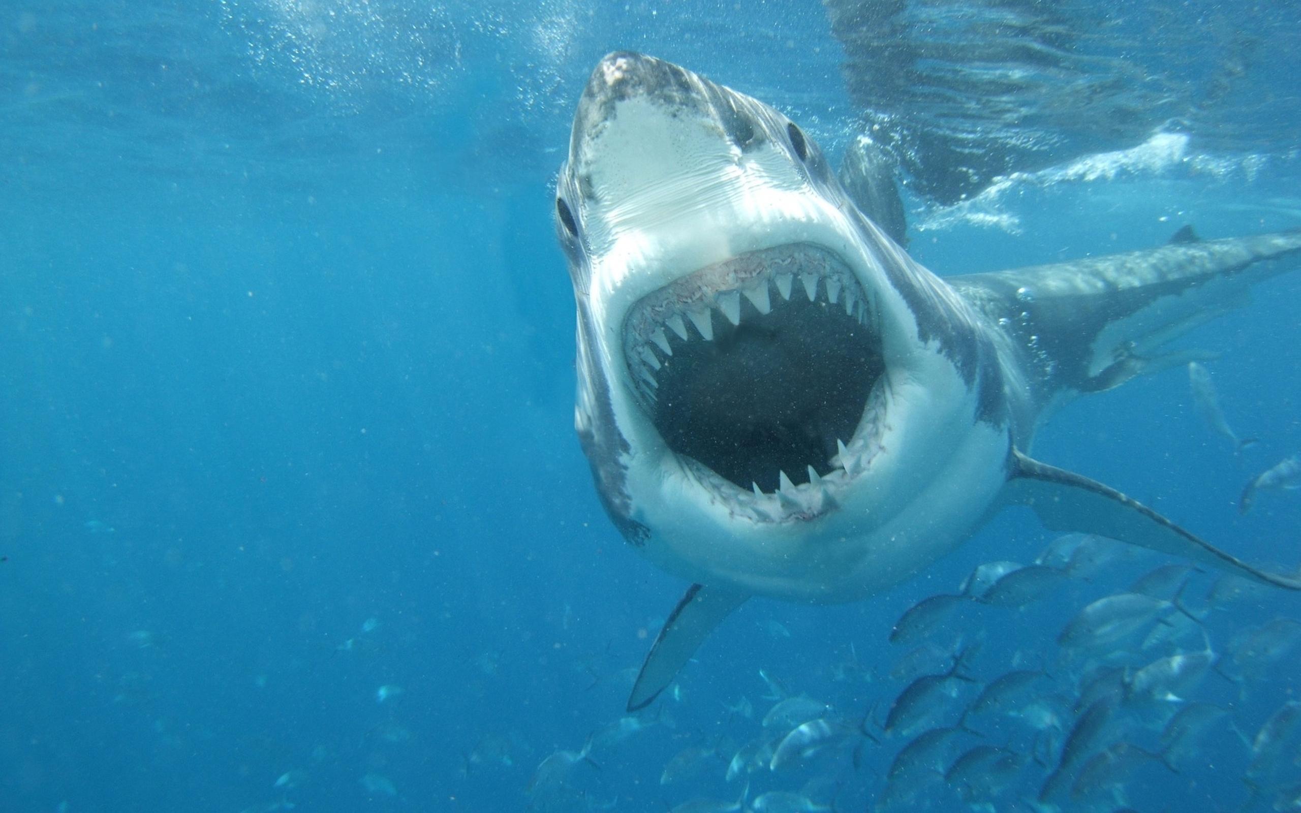 90 Blue Whale Shark Wallpaper