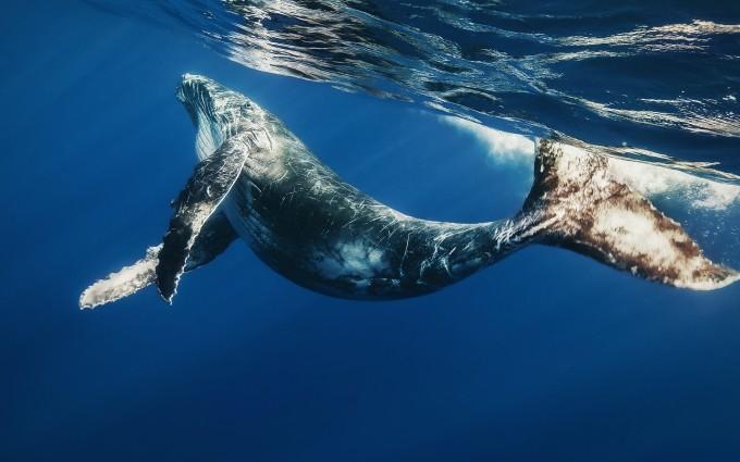 whale wallpaper 1080p