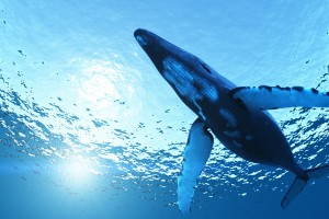 whale wallpaper beautiful