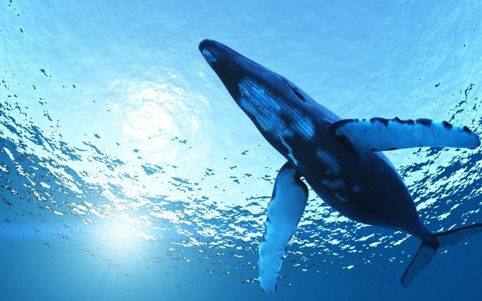 whale wallpaper beautiful