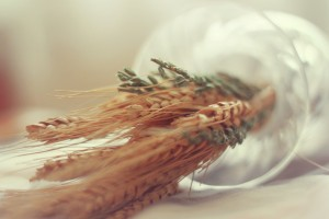 wheat macro wallpaper