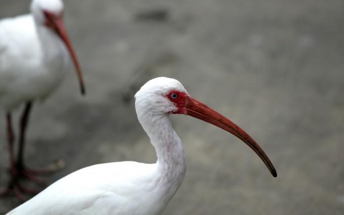 white bird wallpaper