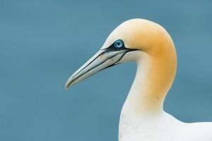 white birds wallpaper