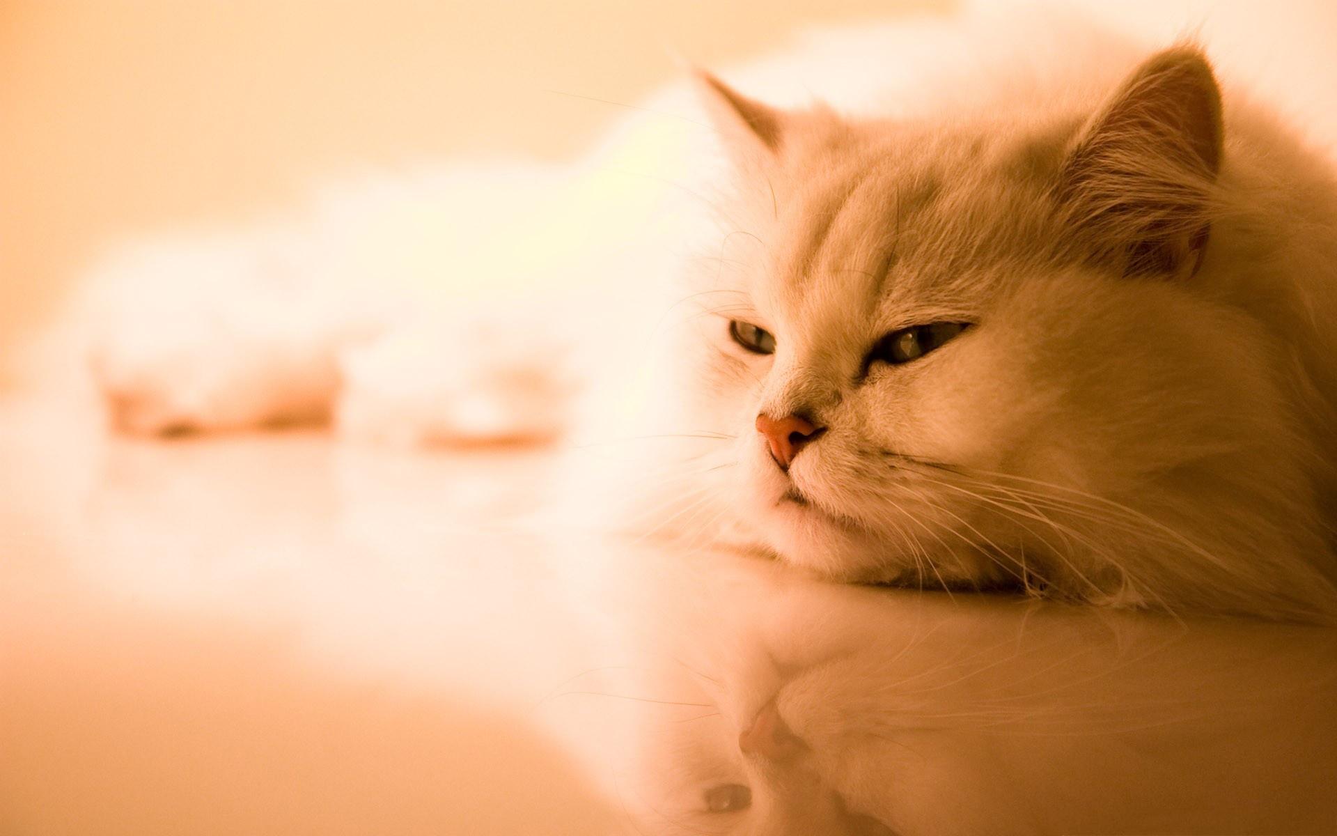 white cat cute