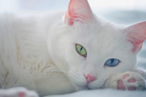 white cat eyes