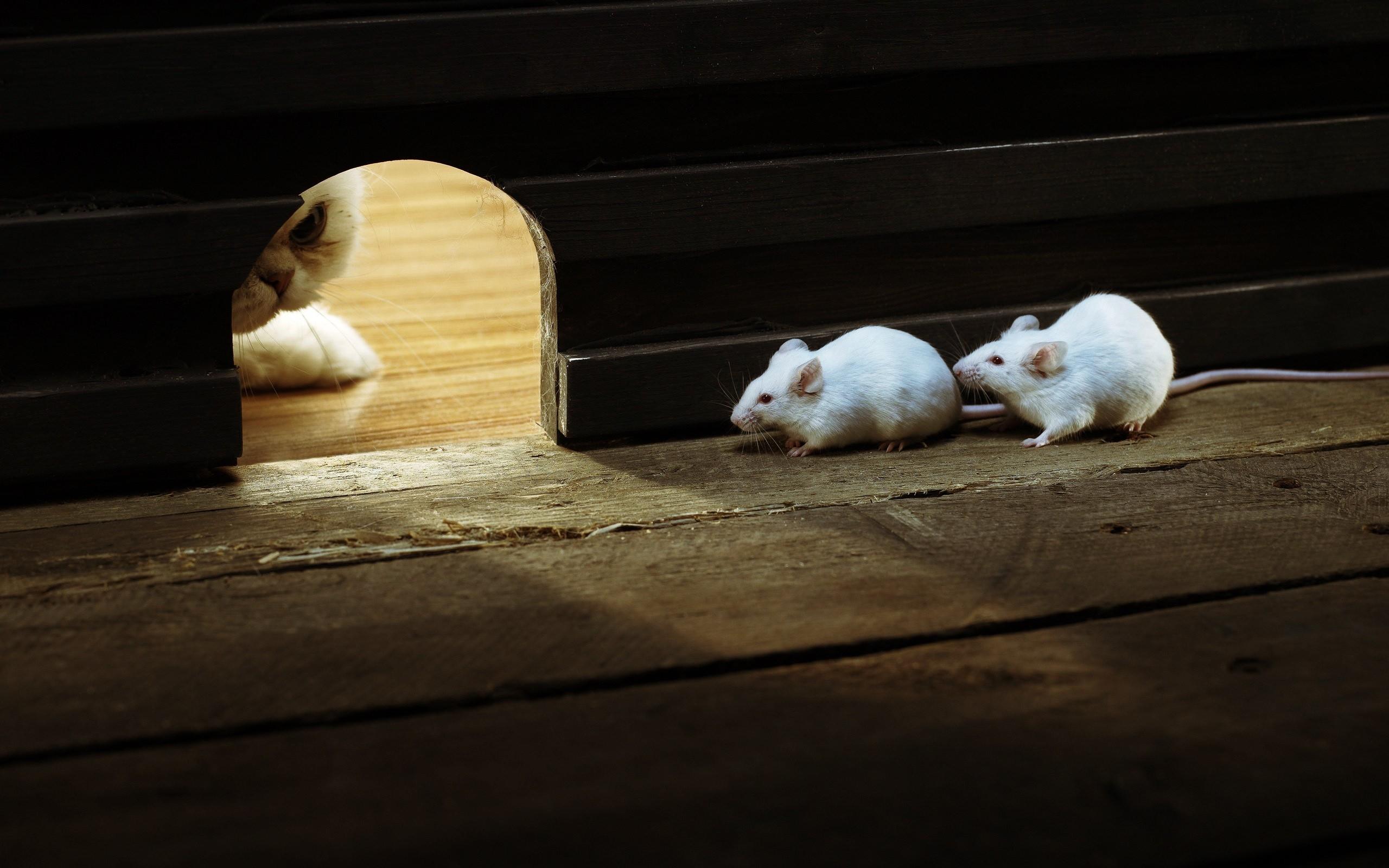 white cat mice