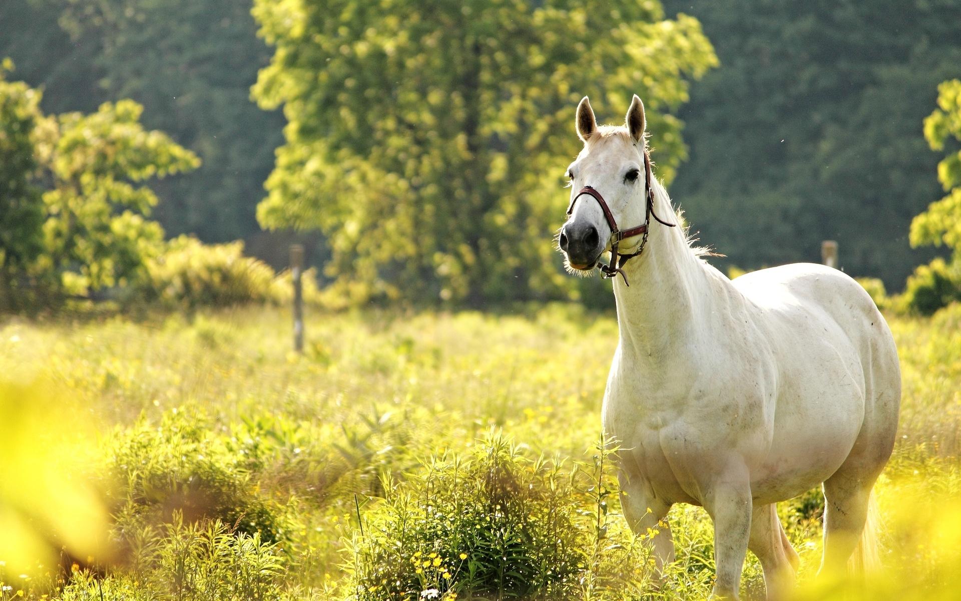 white horse nature