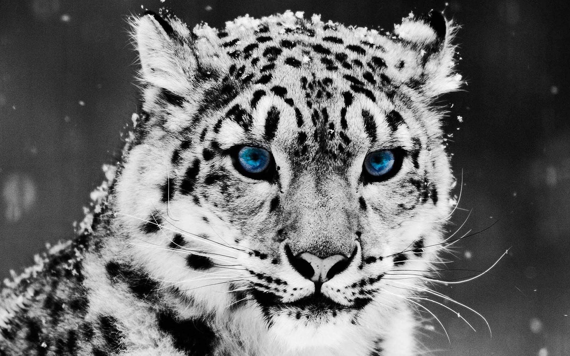 white leopard print wallpaper