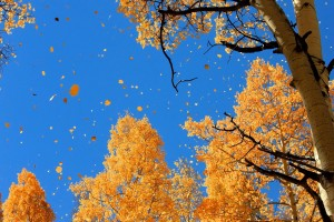 widescreen fall desktop wallpaper