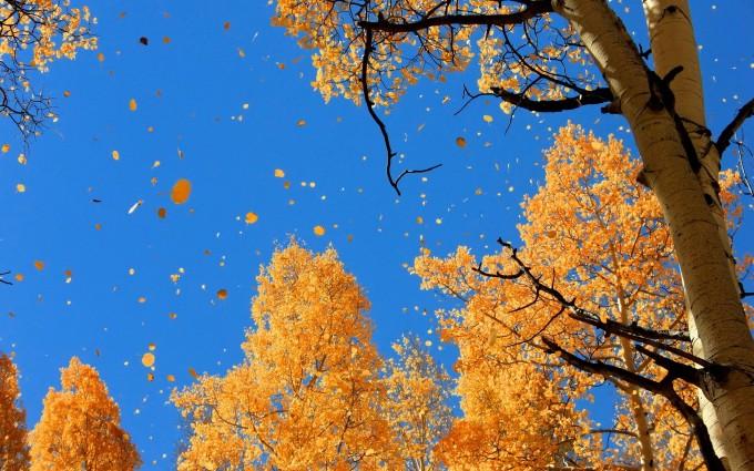 widescreen fall desktop wallpaper