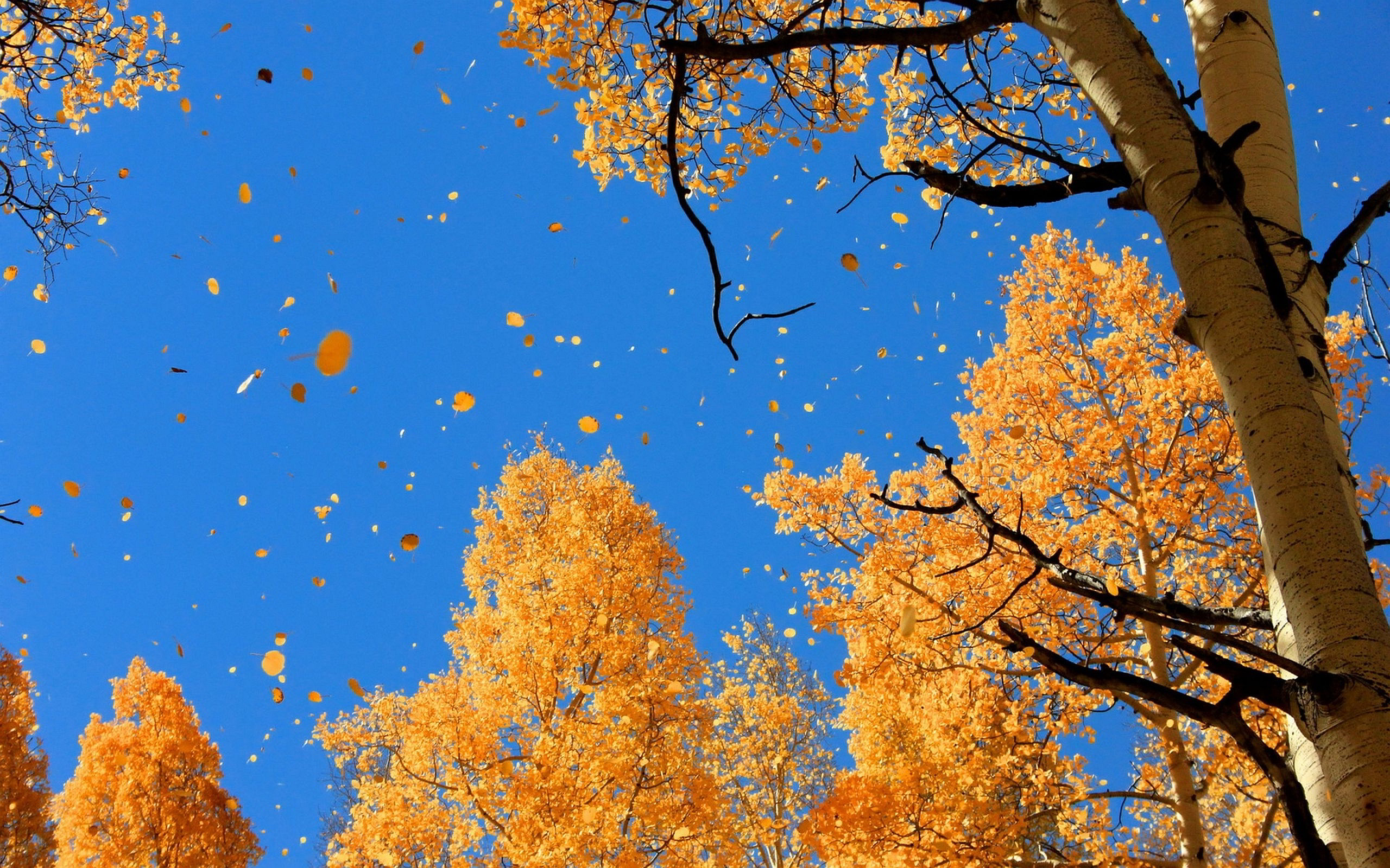 widescreen fall desktop wallpaper - HD Desktop Wallpapers ...