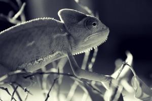 wildlife background download