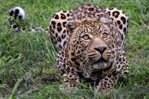 wildlife picture