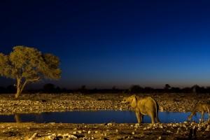 wildlife wallpaper 1080p