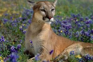 wildlife wallpaper images
