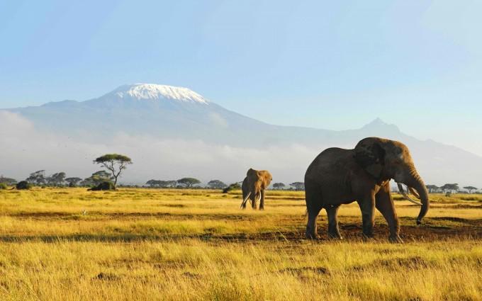 wildlife wallpaper landscape