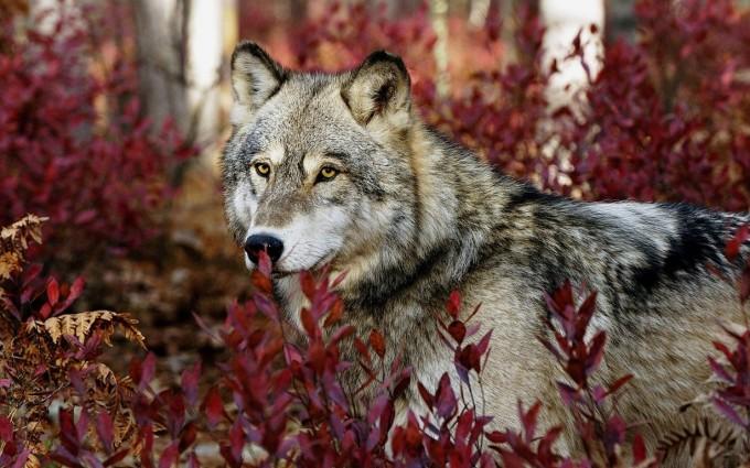 wildlife wallpaper lovely