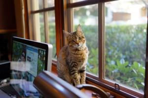 window cat look