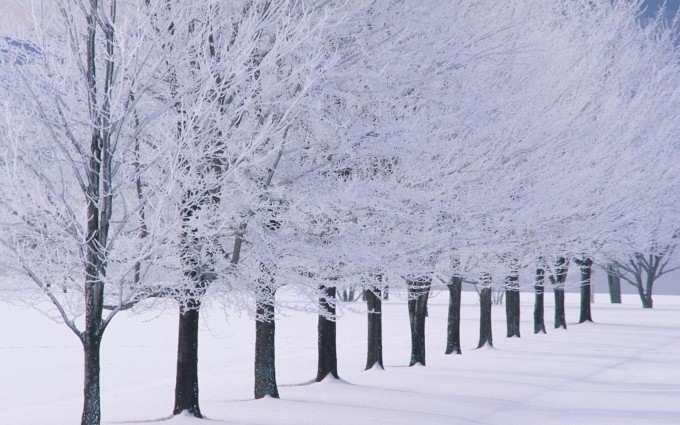 winter backgrounds snow
