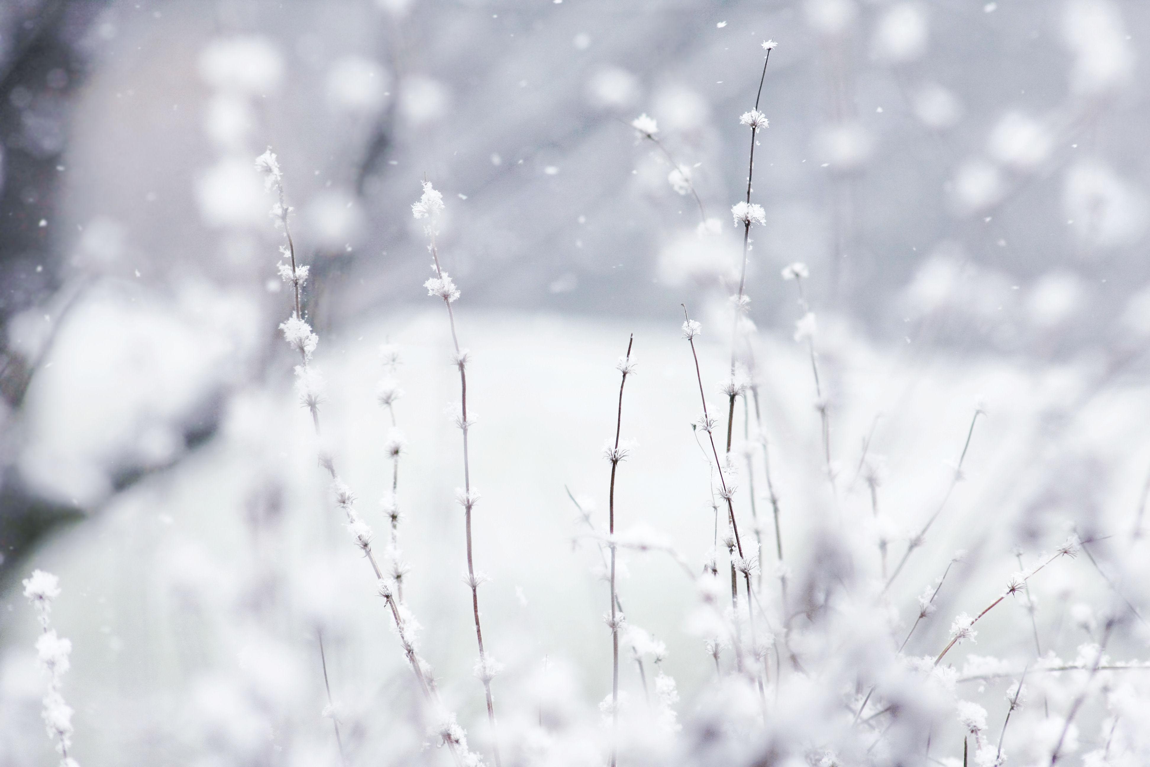 winter desktop wallpaper free