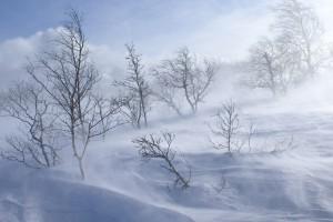 winter desktop wallpapers