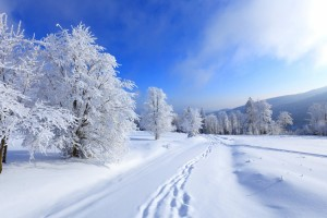winter scenes wallpaper free