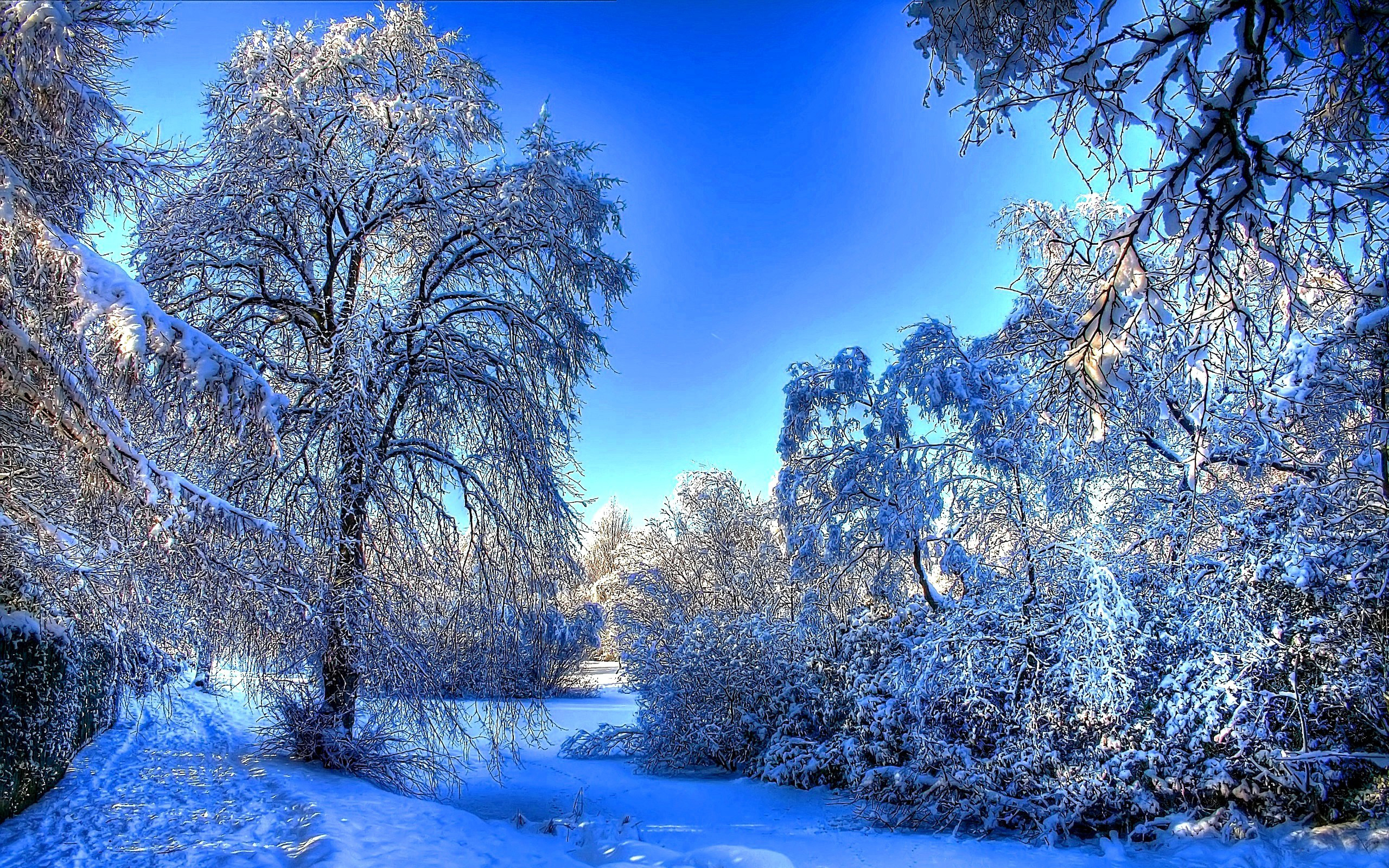 winter wallpaper background