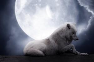 wolf wallpaper A19