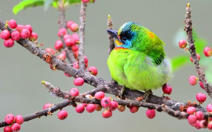 woodpecker nature