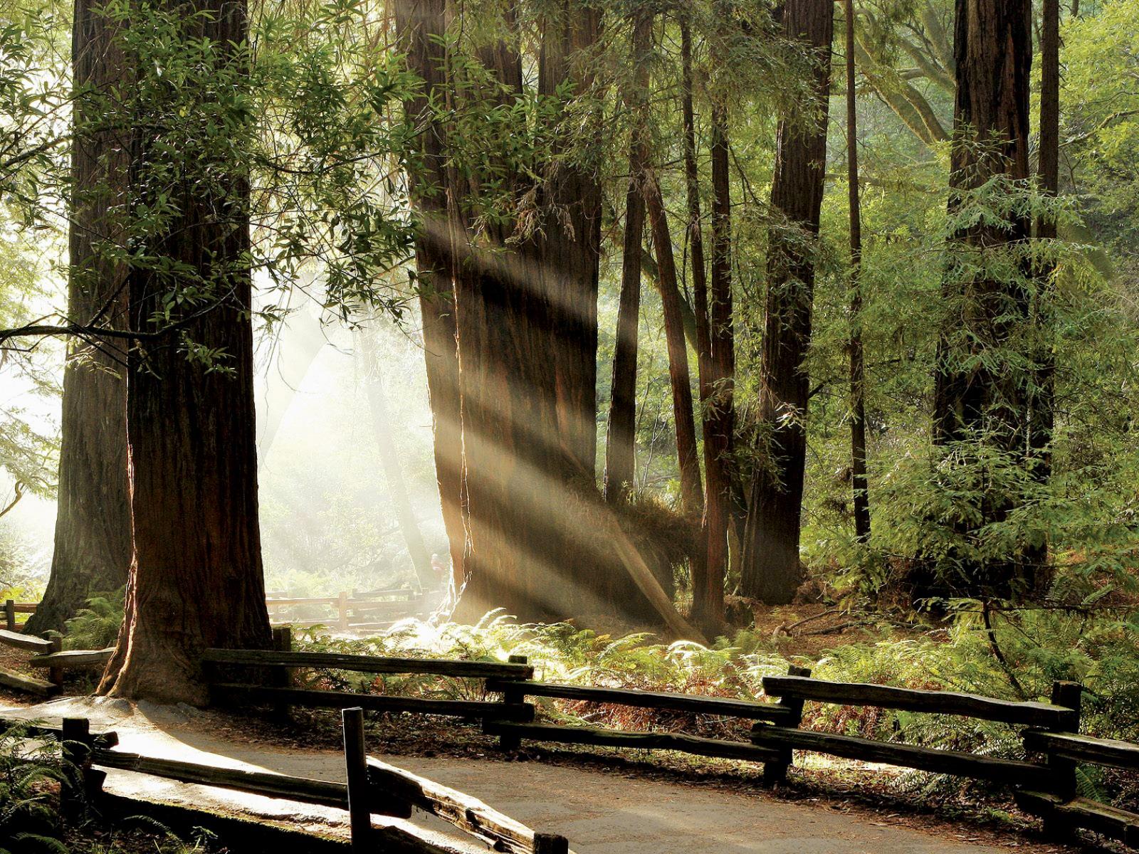 woods wallpaper brown