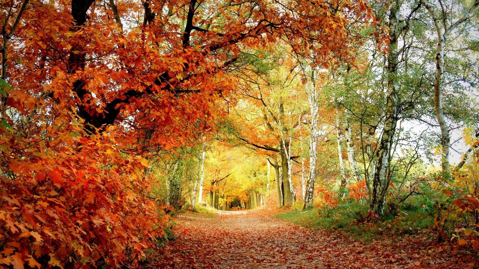 woods wallpaper download