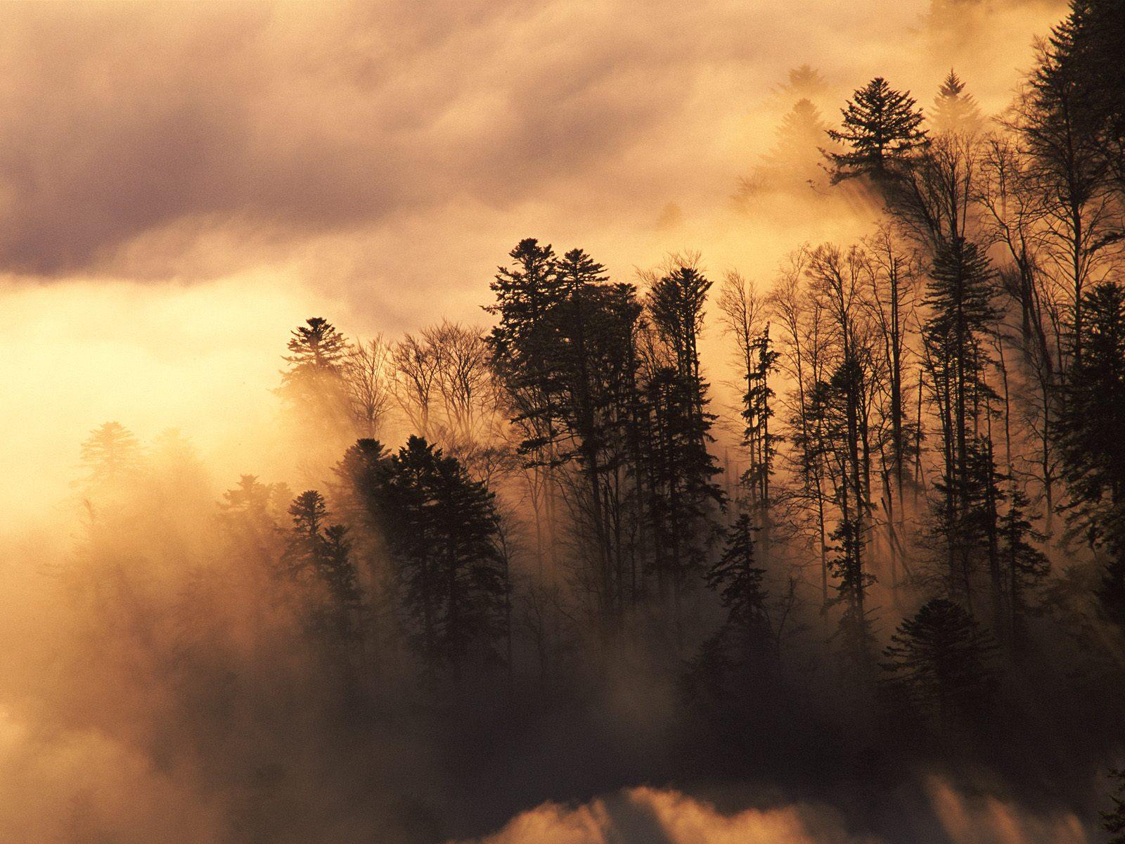 woods wallpaper forest
