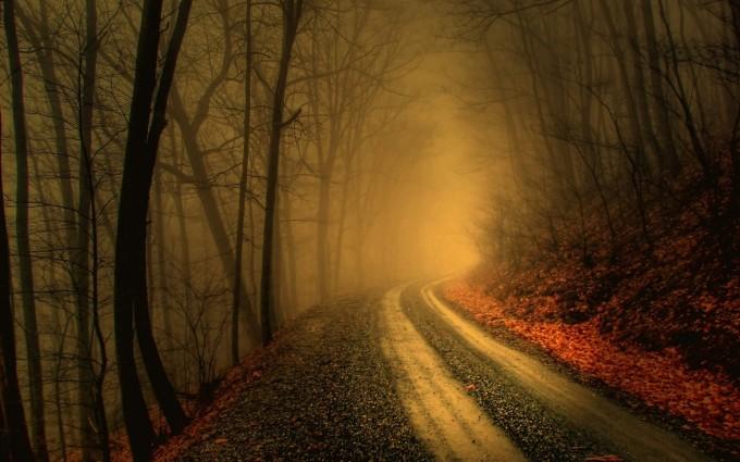 woods wallpaper road