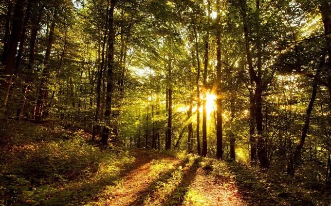 woods wallpaper sunset