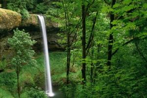 woods wallpaper waterfall cute
