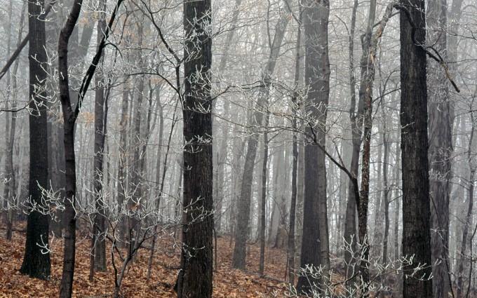 woods wallpaper wild