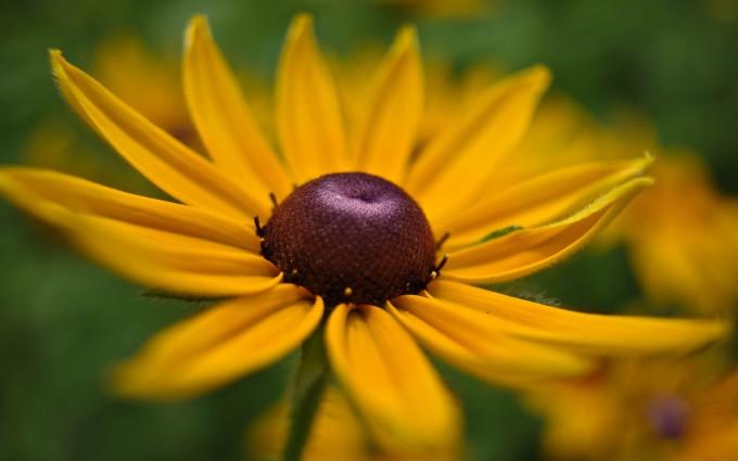yellow flower a1