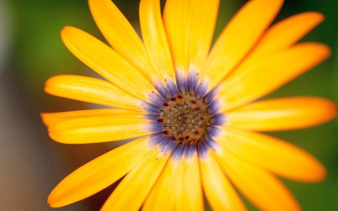 yellow flower nice