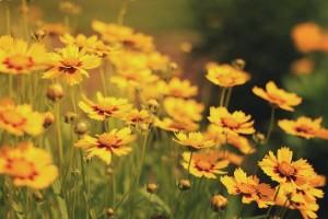 yellow flowers beautiful