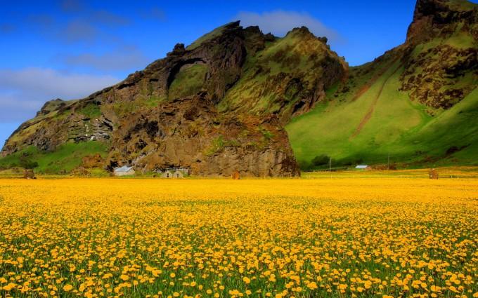 yellow flowers nature hd