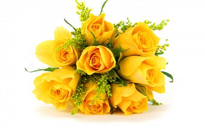 yellow roses beautiful