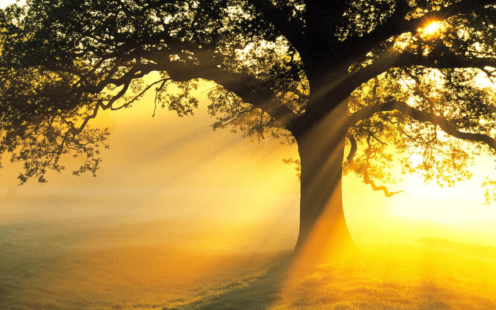 yellow sun rays