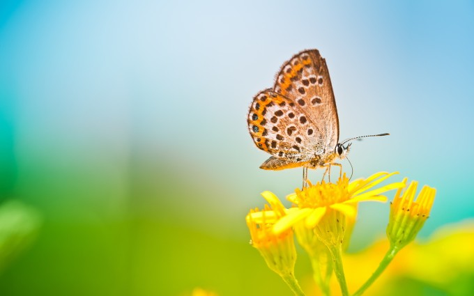 yellow wallpapers butterfly