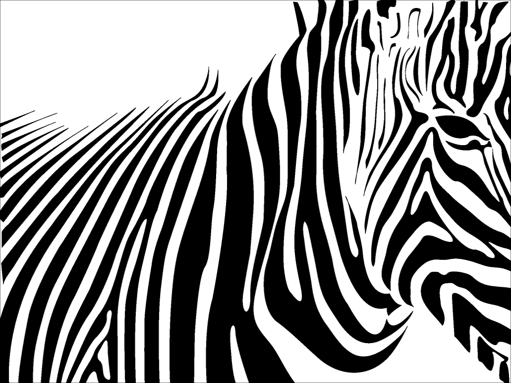 zebra wallpaper 1920x1080p