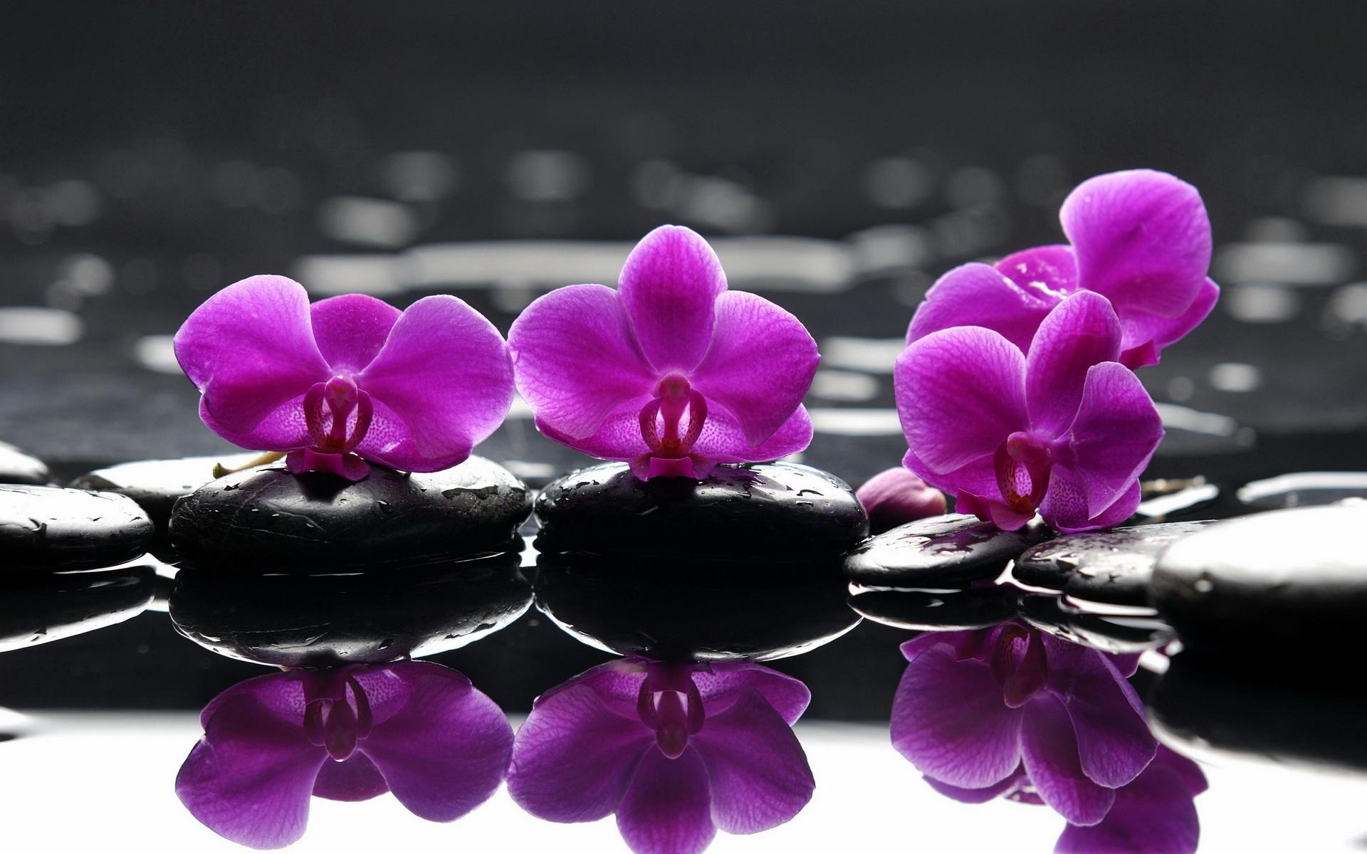 zen images