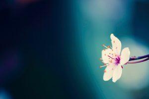 amazing flowers backgrounds