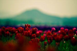 amazing flowers field